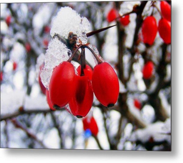 Frozen Red Berries Metal Print