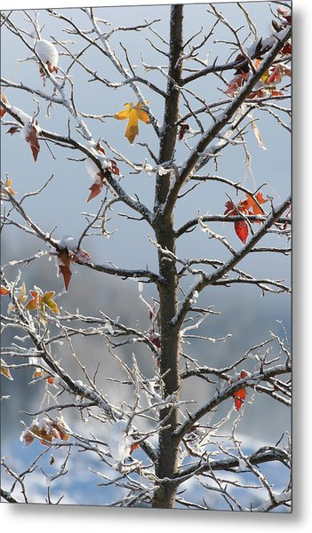 Frozen Remnants Metal Print by Holly Ethan