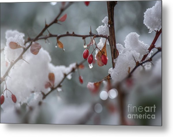 It's Berry Cold Metal Print