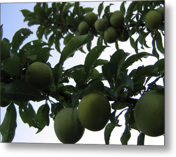 Fruit And Sky_raindrops Metal Print