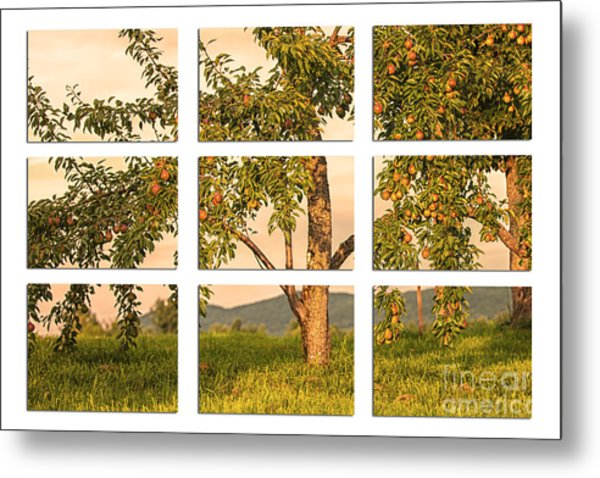 Fruit In The Orchard Through The Window Pane Metal Print
