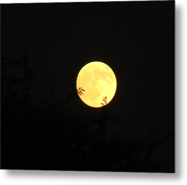 Full Moon August 2008 Metal Print