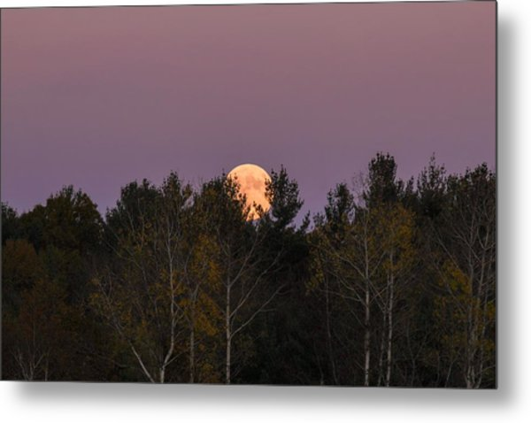 Full Moon Over Orchard Metal Print