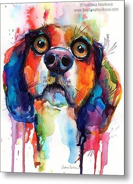 Funny Beagle Watercolor Portrait By Metal Print