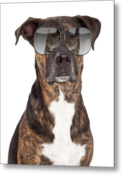 Funny Dog With Cat Reflection In Sunglasses Metal Print
