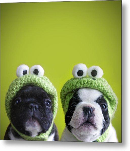 Funny Dogs Metal Print