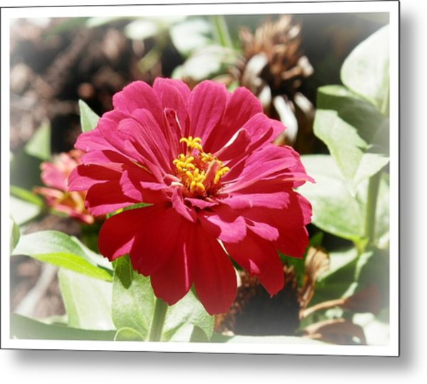 Fuschia Glory Metal Print