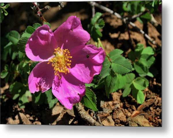Metal Print featuring the photograph Fuschsia Mountain Accent by Ron Cline