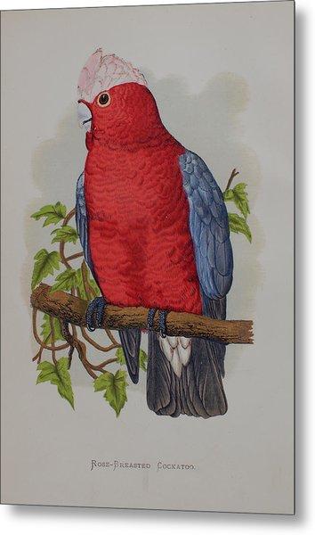 Galah Cockatoo - 1884 Metal Print