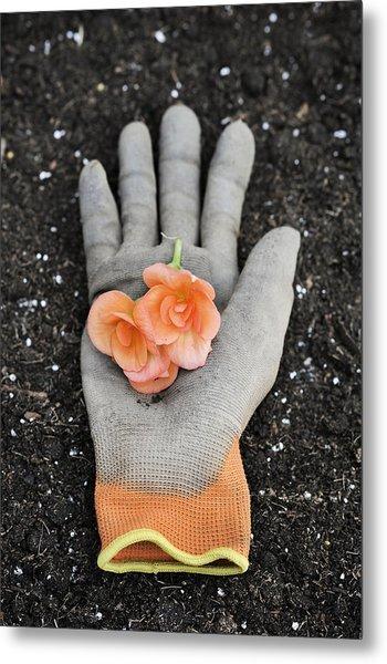 Garden Glove And Flower Blossoms4 Metal Print