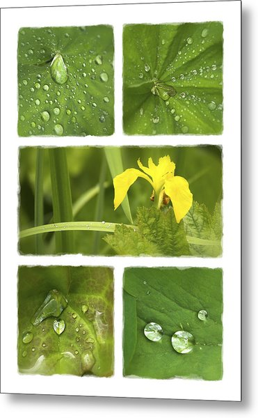 Garden Jewels II Metal Print