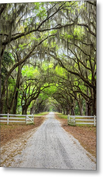 Gated Wormsloe Plantation Metal Print