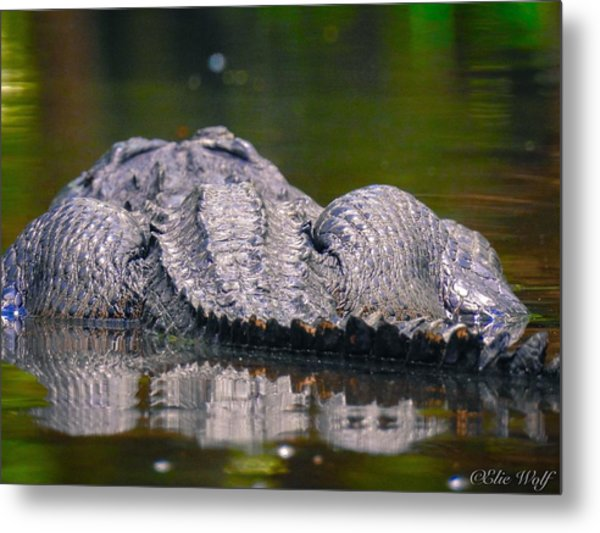 Gator On Ninja Cam Metal Print
