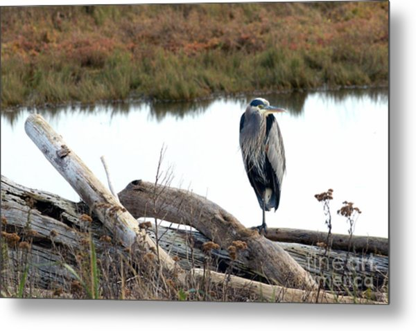 Gbh On Log Metal Print by Sharon Talson