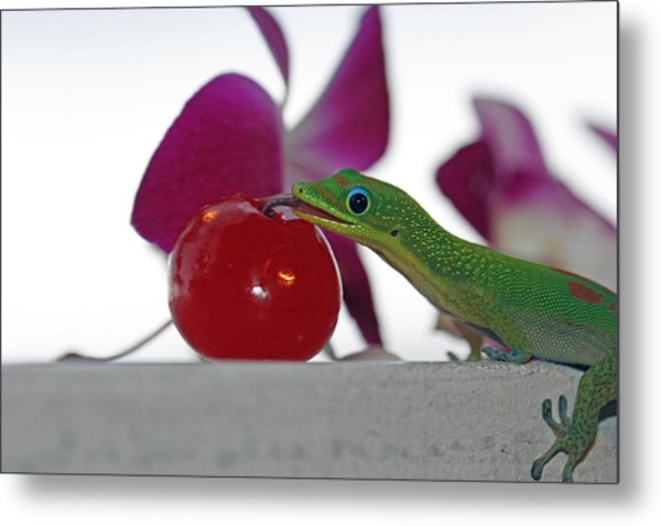 Gecko And Cherry Metal Print by Sue Mayor