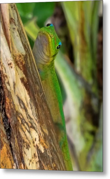 Gecko Up Close Metal Print