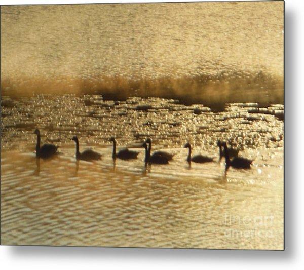 Geese On Golden Pond Metal Print