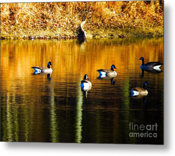 Geese On Lake Metal Print