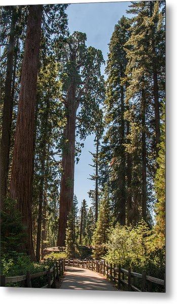 General Grant Tree Kings Canyon National Park Metal Print