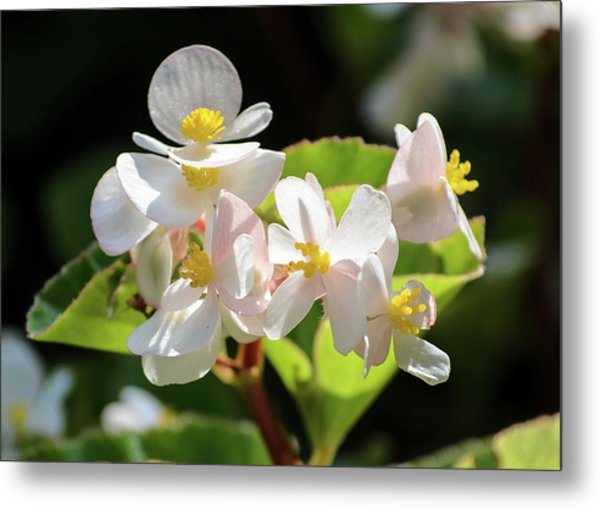Gentle Bloom Metal Print
