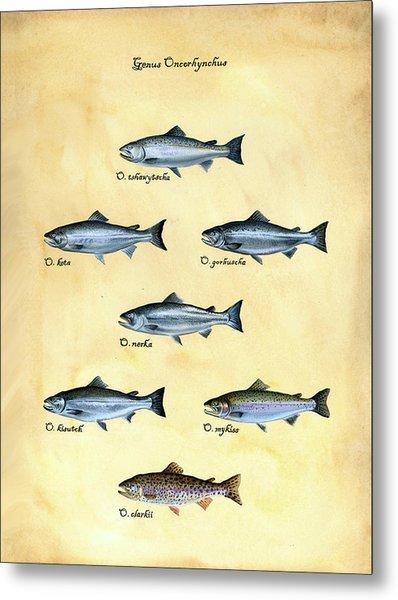 Genus Oncorhynchus Metal Print