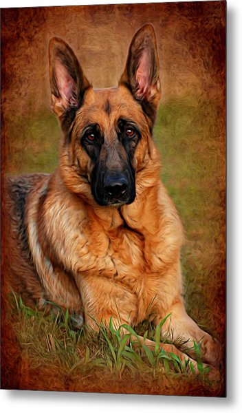 German Shepherd Dog Portrait  Metal Print
