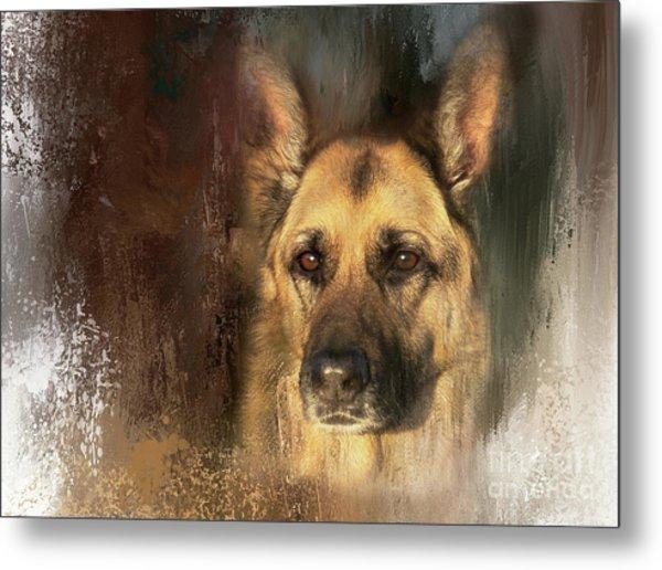 German Shepherd Portrait Color Metal Print
