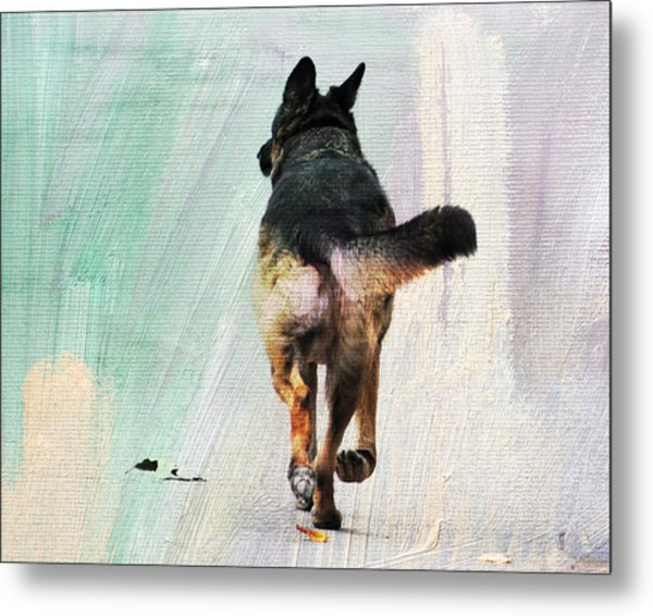 German Shepherd Taking A Walk Metal Print