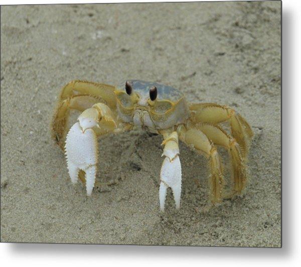 Ghost Crab - 1 Metal Print