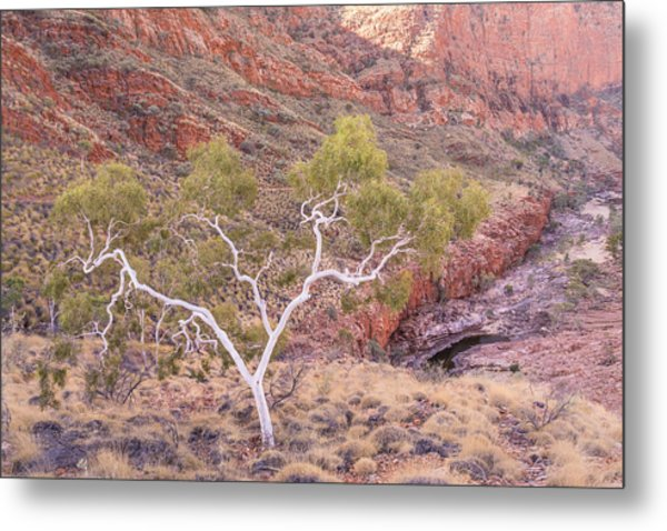 Ghost Gum Metal Print
