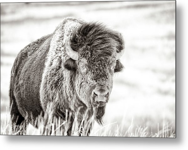 Ghost Of The Prairie Metal Print