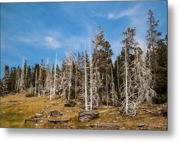 Metal Print featuring the photograph Ghost Trees At Yellowstone by Lon Dittrick