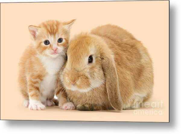 Ginger Kitten And Sandy Bunny Metal Print