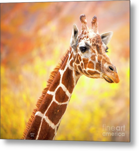 Giraffe, Animal Decor, Nursery Decor,  Metal Print
