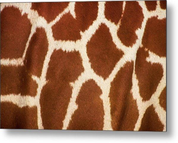Giraffe Textures Metal Print