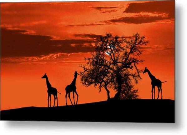 Giraffes At Sunset Metal Print