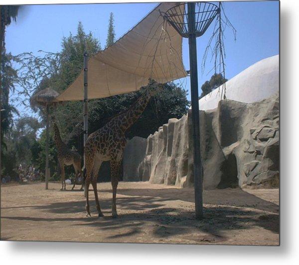 Giraffes Metal Print by Guillermo Mason