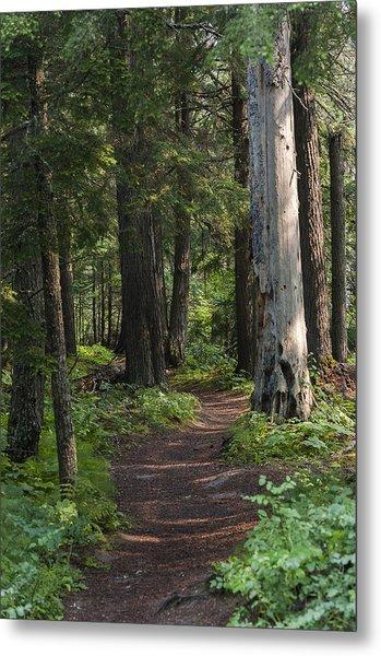 Glacier National Park Woodland Trail Metal Print