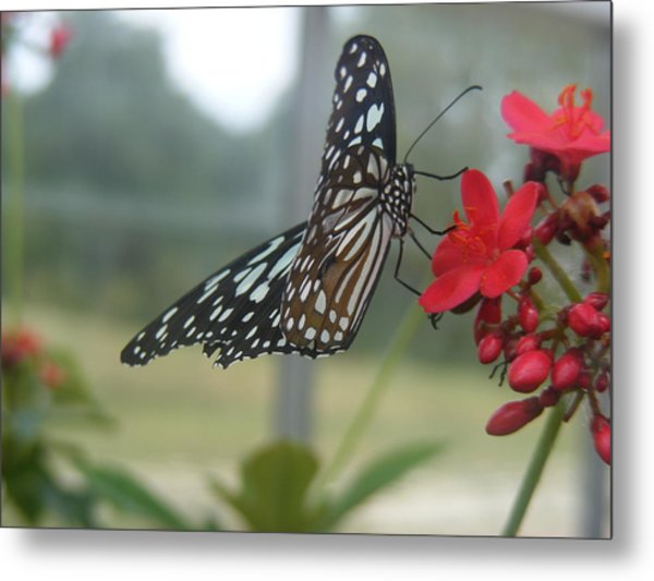 Glass Wing Butterfly Metal Print by James and Vickie Rankin