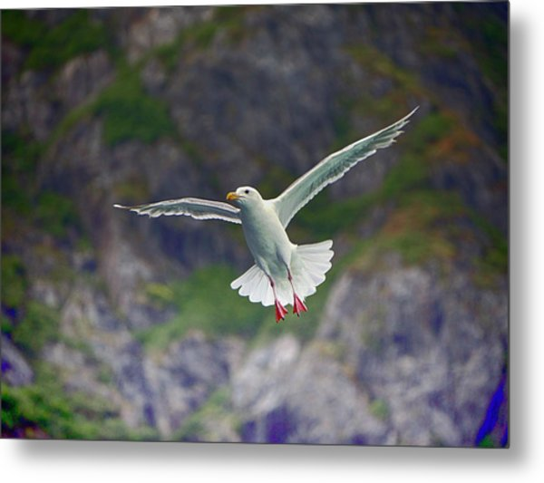Glaucous-winged Gull Metal Print