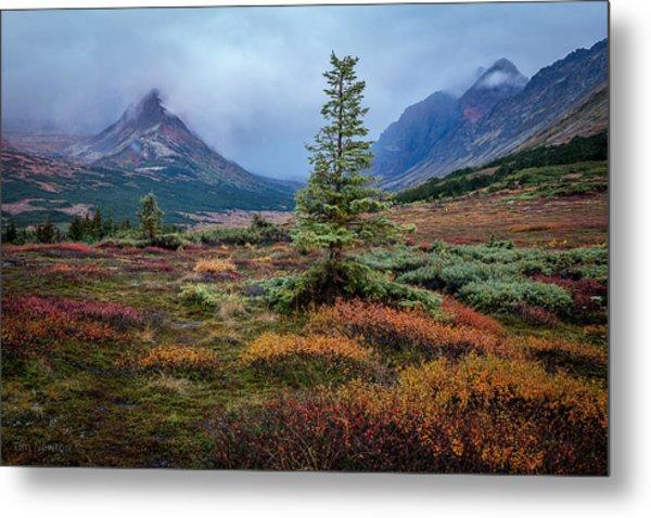 Glen Alps In The Autumn Rain Metal Print