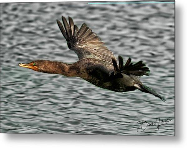 Gliding Cormorant Metal Print