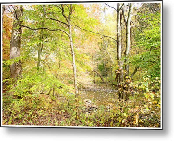 Glimpse Of A Stream In Autumn Metal Print