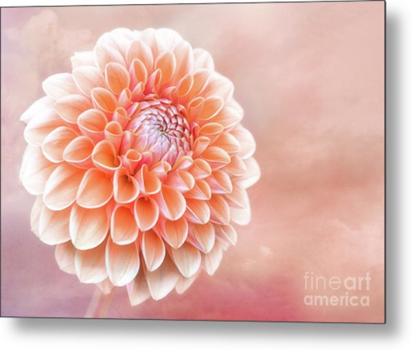 Glorious Salmon Dahlia Metal Print