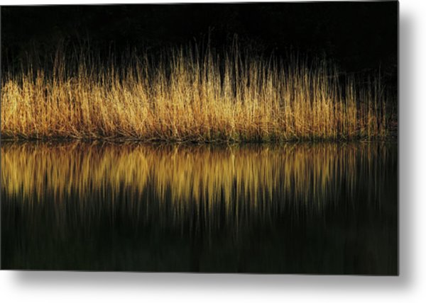 Glow And Reflections At Lakes Edge Metal Print