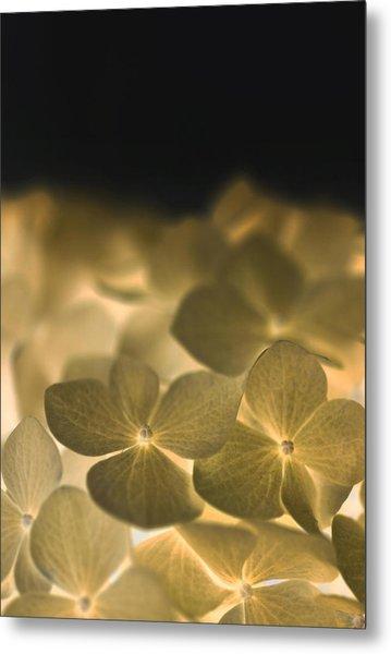 Glow Blossoms Metal Print