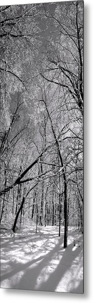 Glowing Forest, Knoch Knolls Park, Naperville Il Metal Print