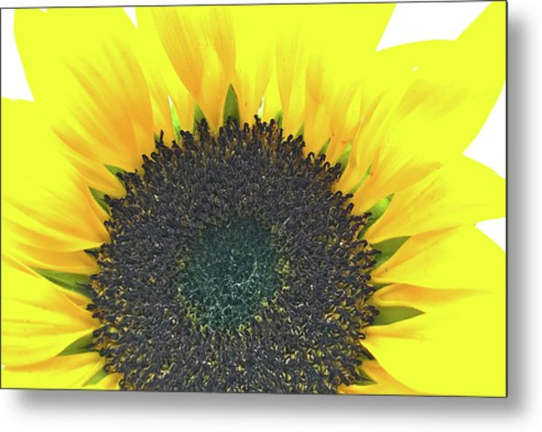 Glowing Sunflower Metal Print