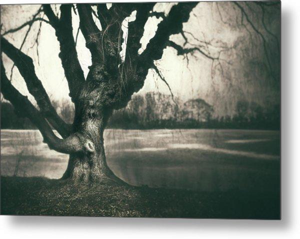 Gnarled Old Tree Metal Print
