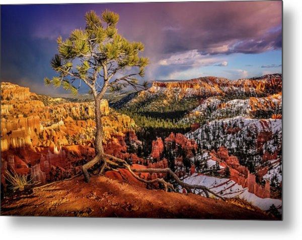 Gnarled Tree At Bryce Canyon Metal Print